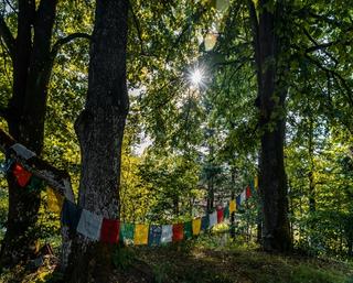 Tagesworkshop Erwecke Deine Sensitivität und lebe in Balance